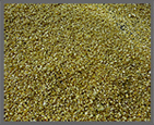 Fine Gold Grains